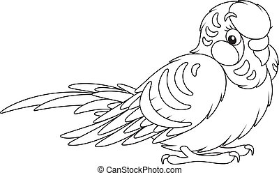 Budgerigar - Black and white vector illustration of a small...