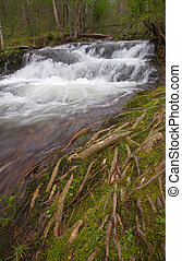Small waterfall through mossy tree roots