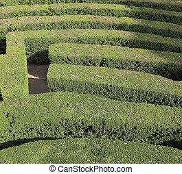 labyrinth with the hedges in an outdoor garden - detail of...
