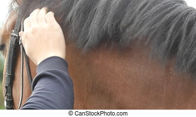 Hand of man stroking mane of horse. Arm of male jockey caresses and petting brown stallion at nature. Care and love for the animals. Close up Slow motion