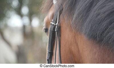 Hand of man stroking mane of horse. Arm of male jockey...