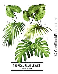 Tropical Vector Palm Leaves - A set of vector isolated...
