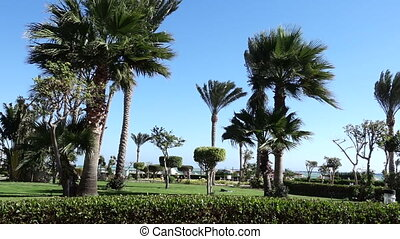 Palm tree swaying on the wind in the beach - Palm tree...