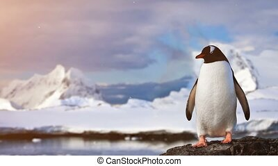 Antarctic Wildlife: lonley penguin standing on the rock -...
