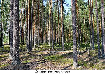 North forest landscape in Karelia, Russia