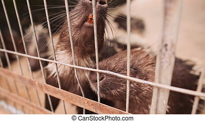 Porcupine to the cage