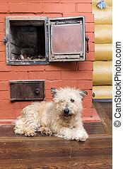 White domestic dog warms himself by the furnace