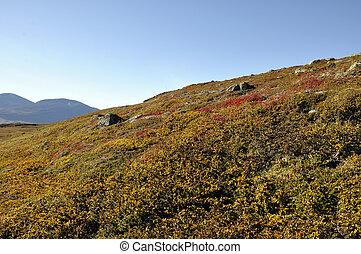Mountain in autumn - Abisko national-park in Sweden in...