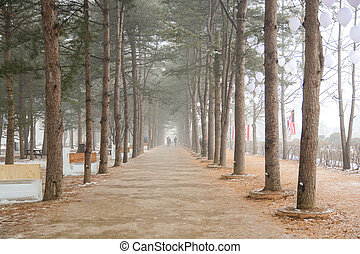 Row of pine trees in winter of Nami island - Row of pine...