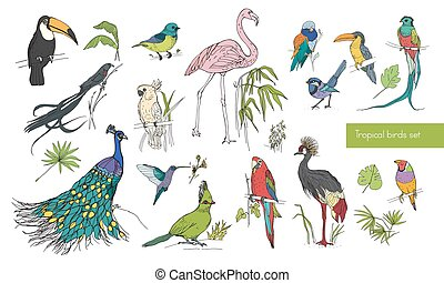 Realistic hand drawn colorful collection of beautiful exotic...