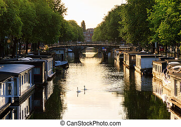Summer swans in the canal - Beautiful summer sunrise on the...