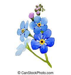 Wildflower myosotis arvensis flower in a watercolor style...