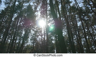 Tracking shot in a thick deciduous forest. Sun glimmering...