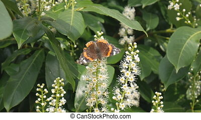 Spring. Butterfly on flowers.