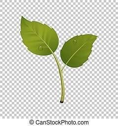 Green sprout design element. Vector illustration with leaf pair and drops of dew. Ecology concept, realistic icon in EPS10.