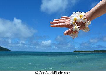 donna, frangipani, mano, tropicale, Ricorso, decorare, fiori...