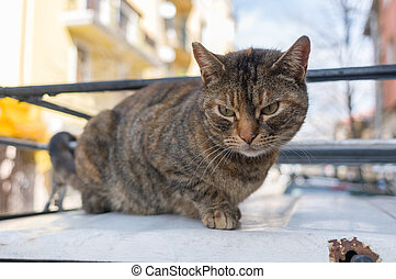 street kitten posing - street cat posing before the lens of...