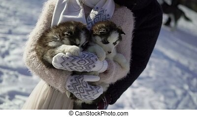 Man and woman with two husky dogs puppies at winter sunny...