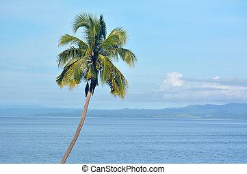 tropicale, palma, albero, paesaggio, fondo