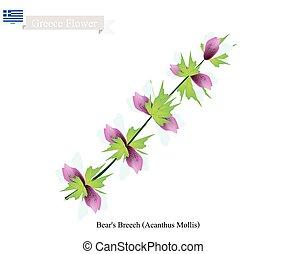 Bear's Breech Flowers, National Flower of Greece - Greece...