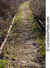 Deserted railway line in vertical format