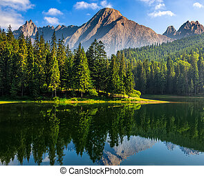 spruce trees near the lake in mountains - composite summer...