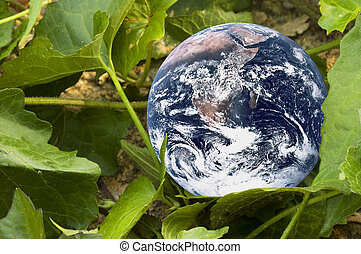 Living Planet Earth - Image of planet earth with green...