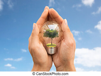 hands holding light bulb with tree inside over sky