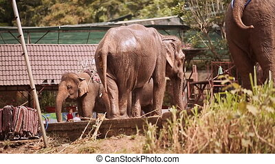 Tourist elephants stand on outdoor (Shot in Full HD -...