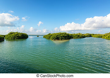 Mangroves in Mexico - Mangroves in the Sian Kaan Biosphere...