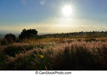 sun shining over the tall grass field in Volcano National...