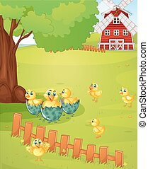 Little chicks on the farmyard