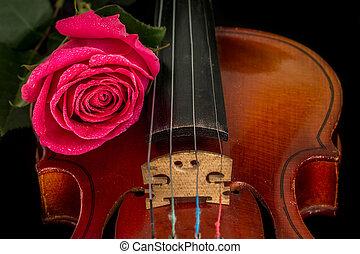 Violin sheet music and rose.