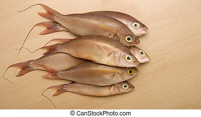sea bass - several sea bass on a light background