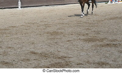 Foot of horse walking on the sand. Close up of legs of...