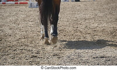 Foot of horse walking on the sand. Close up of legs of stallion galloping on the wet muddy ground. Slow motion Rear back view