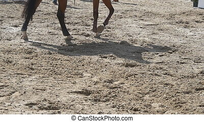 Foot of horse walking on the sand and starting running....