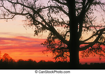Sunrise - Beautiful sunrise showing a sihouetted tree