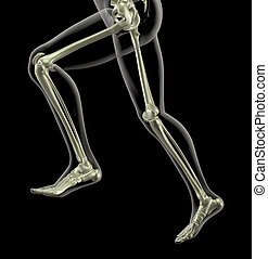 medical skeleton in running motion