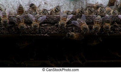 Honeybees - Close up of a honeybees hive