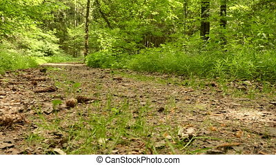 Trail in the park. Smooth and slow panorama cam shot. Clean...