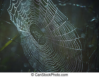 dewy cobweb - Close-up of the spider web wet with dew