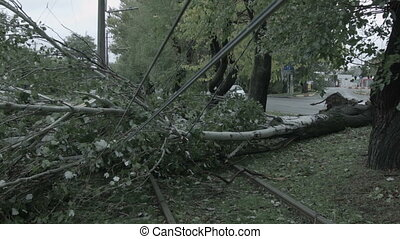 The storm caused severe damage to electric poles falling...