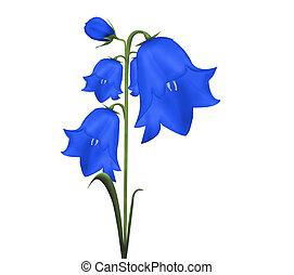 Bell flower - Objects - flower