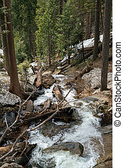 Mountain river in fir woodland in spring, Sequoia National...