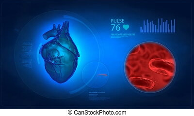 Human heart medical display with bl