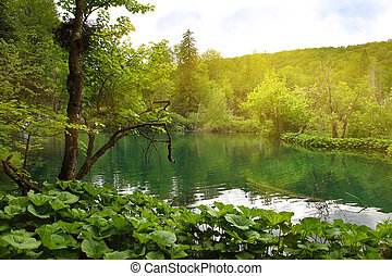 Plitvice Lakes - beautiful lake in forest of Plitvice Lakes...