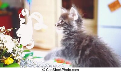 Playful Maine Coon kitten blue colored sits near the basket...