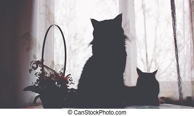 Silhouettes of Maine Coon cats and soap bubbles on the...