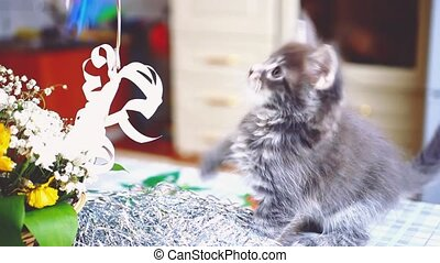Cute playful Maine Coon cat blue colored sits near the...